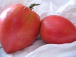 Tomate - Anna Russian