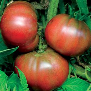 Tomate - Black from Tula