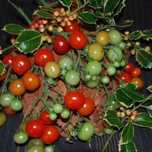Tomate - Christmas Grapes