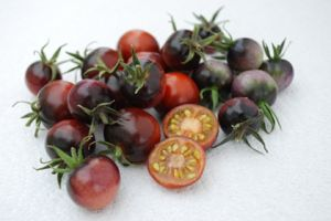 Tomate - Indigo Blue Berries