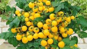 Tomate - Window Box Yellow