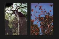 Wayside Trees of Malaya - Vol. 1 + 2