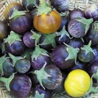 Solanum melongena 'Lao Purple Stripe'