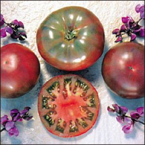 Tomate - Cherokee Purple