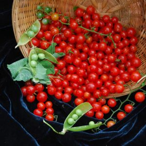 Tomate - Currant Sweet Pea