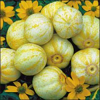 Cucumis sativus 'True Lemon'